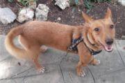 Kleiner Foxi sucht sein Glück