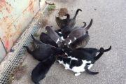 15 Streunerkatzen verlieren Futterplatz