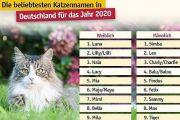 Die beliebtesten Katzennamen im Jahr 2020